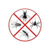 От тараканов и муравьев